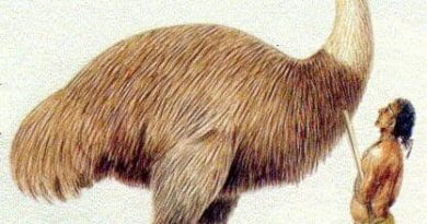 யானைப்பறவை Elephant Bird