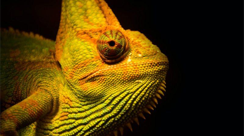 பச்சோந்தி நிறமும் குவாண்டம் இயற்பியலும் How Quantum Physics Helps Chameleons Find Love